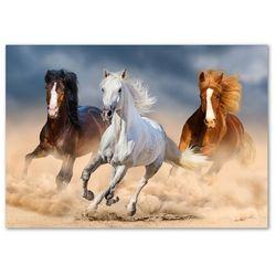 Foto obraz szkło akryl Konie na pustyni