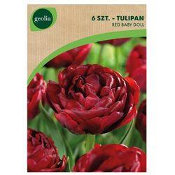 Tulipan pełny wczesny RED BABY DOLL 5 szt. cebulki kwiatów GEOLIA