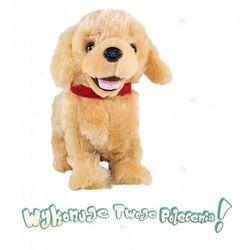 Piesek Figo Mądry szczeniak beżowy - Madej