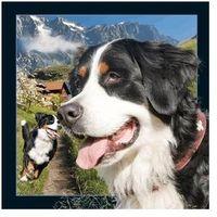 Pozostałe artykuły papiernicze, Pocztówka 3D Berneński pies pasterski