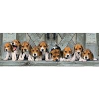 Puzzle, Clementoni 1000 elementów Panorama High Quality Beagles