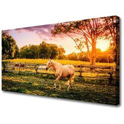 Obraz na Płótnie Koń Łąka Zwierzęta Przyroda