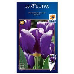 Tulipany Triumph