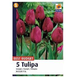 Tulipan Triumph Negrita