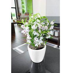 Donica lechuza classico ls - taupe (kawa z mlekiem) - 50 cm, połysk