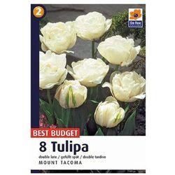 Tulipany Mount Tacoma