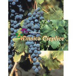 Sadzonka winorośli Montepulciano rabat 8%