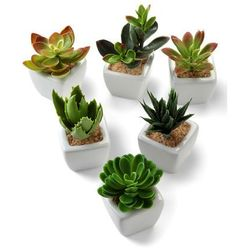 Sztuczne kwiaty sukulenty (6 szt.) bonprix zielony