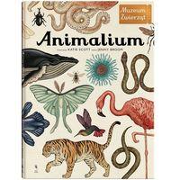 Książki dla dzieci, Animalium Muzeum Zwierząt - Jenny Broom. Katie Scott (opr. twarda)