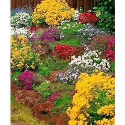 Kolekcja roślin alpejskich 5 szt